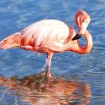 Flamingo's bij het Gotomeer